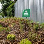 Ghilde de plante_gradina urbana Kaufland Bucurestii Noi