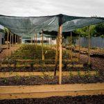 Parcele cultivate_in gradina Kaufland Bucurestii Noi