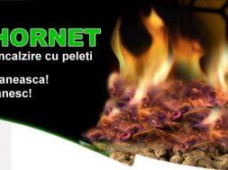 eco-hornet